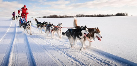 Estonian nature | Husky Dog Sledding | Day Activities | The Weekend In Tallinn